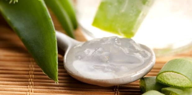 Salbe aus Aloe vera wird eine antientzündliche, wundheilende und feuchtigkeitsspendende Wirkung nachgesagt