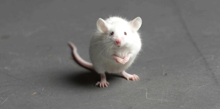 Maus vergasen lassen