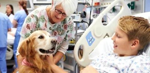 Ein Junge im Krankenhaus streichelt einen Hund