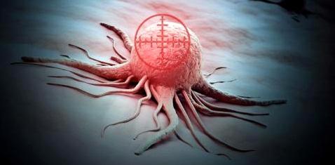 Modifizierte Milzbrandbakterien zerstören Krebs