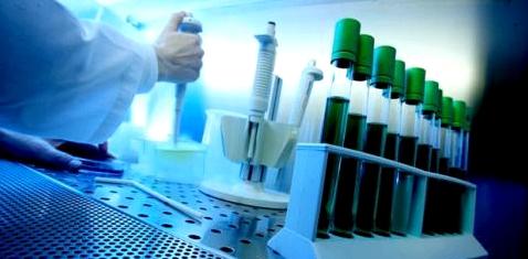 Molekül täuscht Krebs