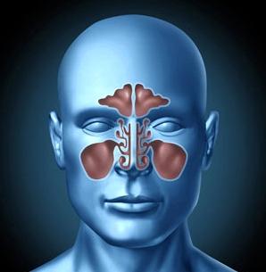 Nasennebenhöhlen sind Hohlräume im Schädelknochen