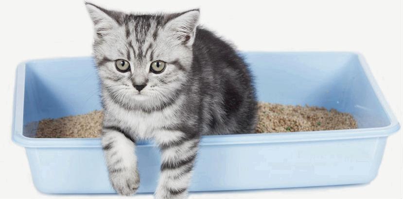 Beim Menschen hat eine Infektion mit Toxoplasmose verschiedene Ursachen, zum Beispiel durch den Kontakt mit infiziertem Katzenkot (zum Beispiel beim Reinigen der Katzentoilette)