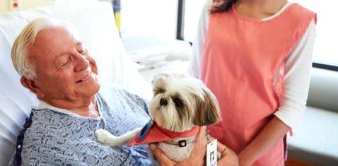 Ein Mann im Krankenhaus hat Besuch von seinem Hund