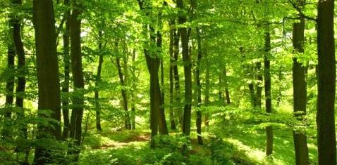 Wald als Natur-Apotheke