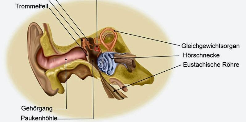 Eustachische Röhre