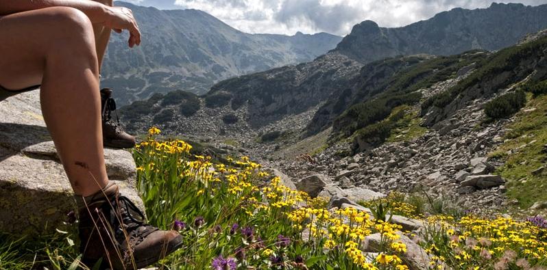 Arnika - die gelbe Blume wächst im Gebirge
