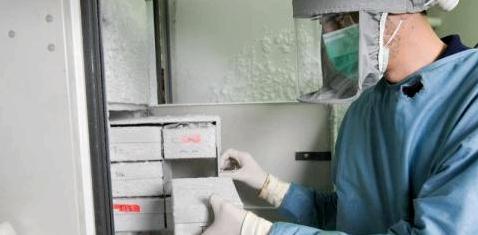 Ein Laborarbeiter nimmt eine Schachtel aus einem Kühlfach