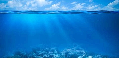 Viren im Ozean
