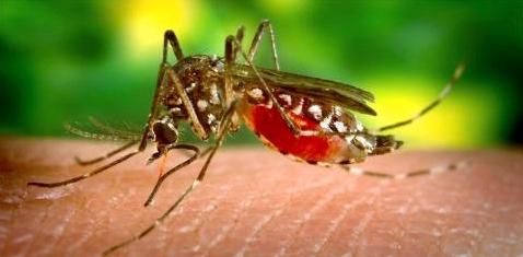 Mücke sticht zu
