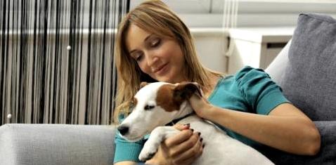 Hunde besser als Katzen bei Tierhaarallergie