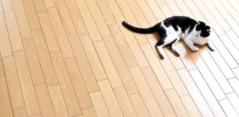 Teppiche und Polstermöbel so weit wie möglich aus der Wohnung entfernen