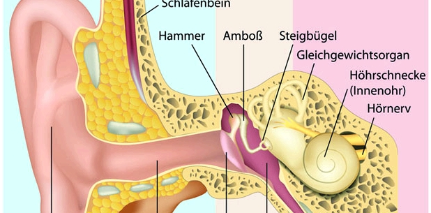 Aufbau des Mittelohrs