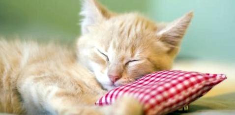 Katzen gegen Krebs