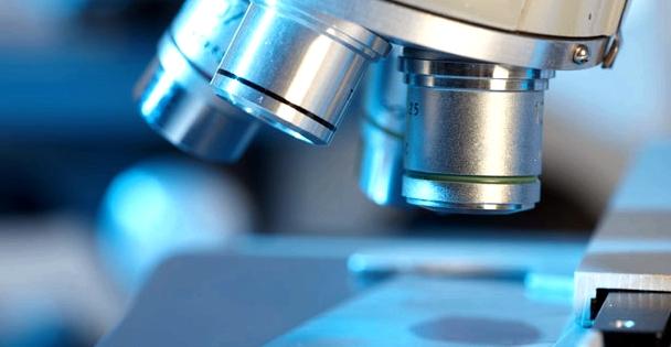 Unter dem Mikroskop lassen sich Pilzerkranungen erkennen