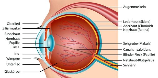 Beim Grauen Star wird die Augenlinse getrübt